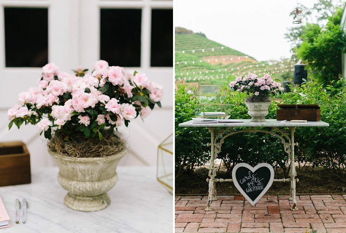 blooming plant vineyard wedding