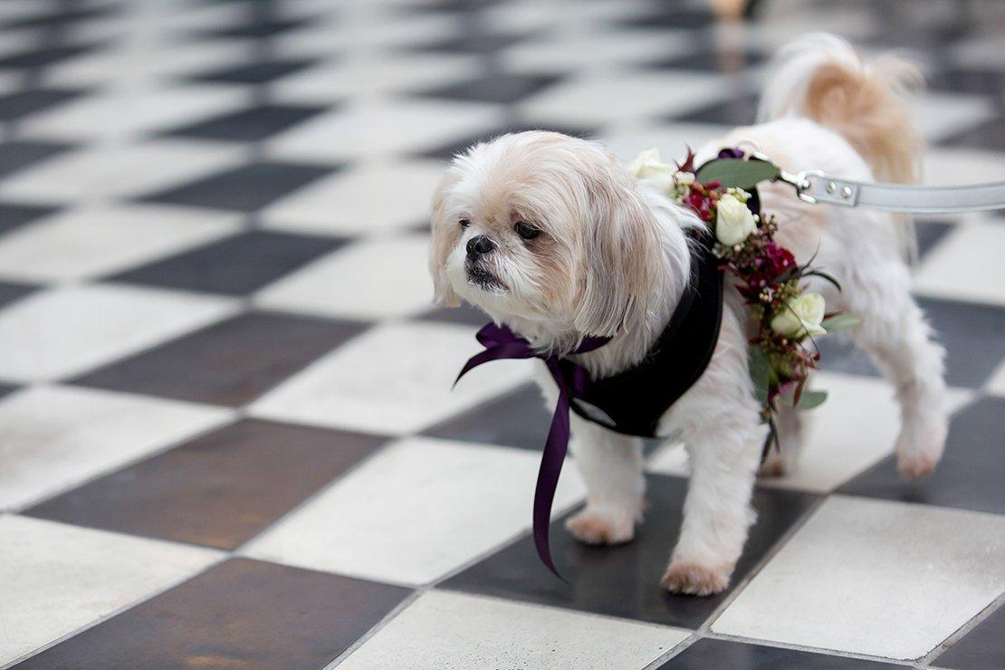 pet wedding florals